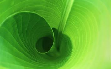 LeafSpiral